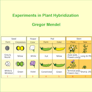 Experiments in Plant Hybridisation(3845) by Gregor Mendel audiobook cover art image on Bookamo